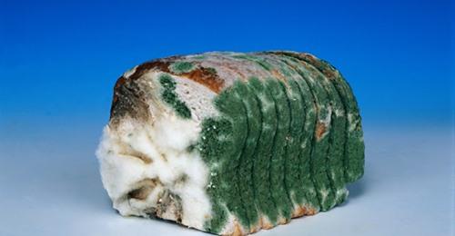 Врач натуропат, кандидат медицинских наук, Виктор Хрущев: «Срочно исключите из своего рациона современный хлеб!»