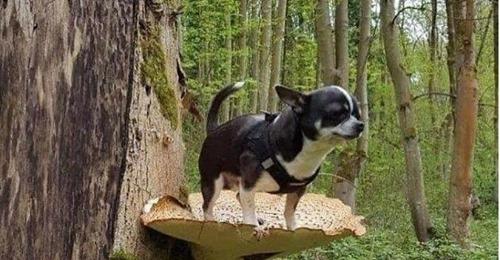 Новый тренд: хозяева фотографируют маленьких собачек на больших грибах