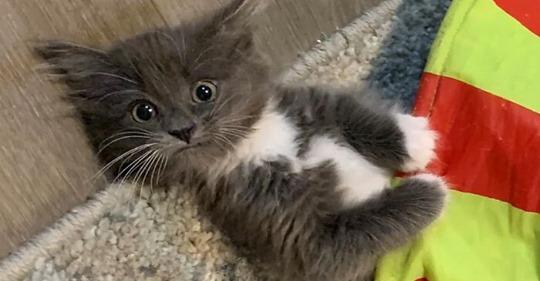 У кошки-очаровашки с неизлечимой болезнью всё же появился дом