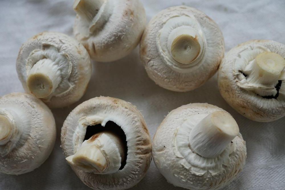 Мытье, хранение и другие ошибки, из-за которых грибы становятся «резиновыми» при готовке