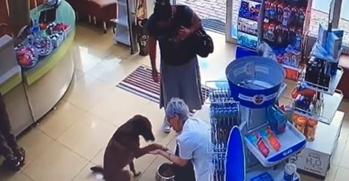 Камеры засняли, как хитрый пес зашел в аптеку и попросил о медицинской помощи