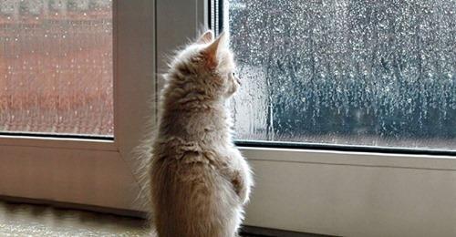 Пушистые ждуны: подборка котиков, ожидающих своих хозяев после работы!