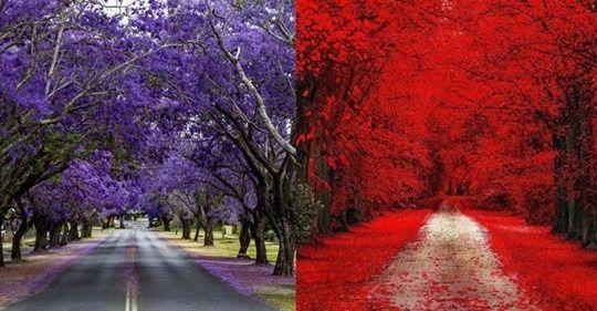 Сказочные тропы и дороги, которые словно ведут в другой мир