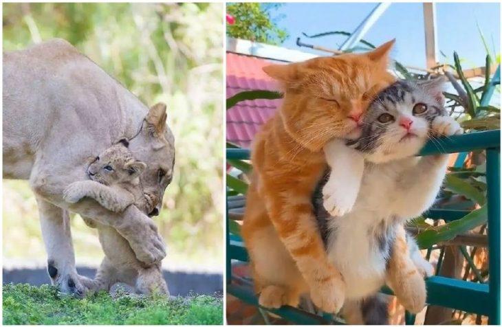 Снимки милых обнимашек домашних животных