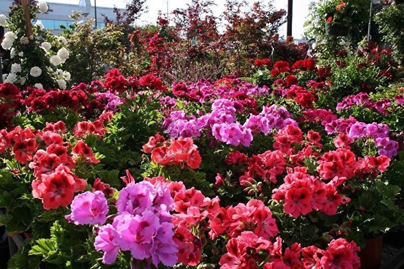 Бегония и другие цветы, которые пора сеять: растения для посадки в январе