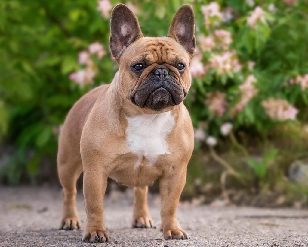 Французский бульдог и не только: породы собак, которые стоит завести семье с детишками