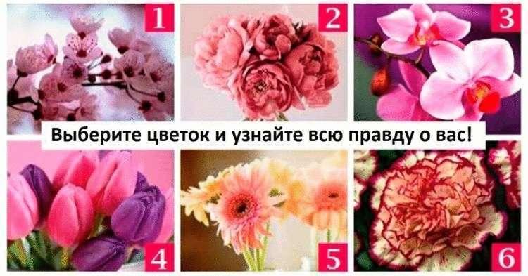 Выбираем цветок на картинке — и узнаем о себе нечто новое