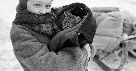 Коты Ленинграда в блокаду