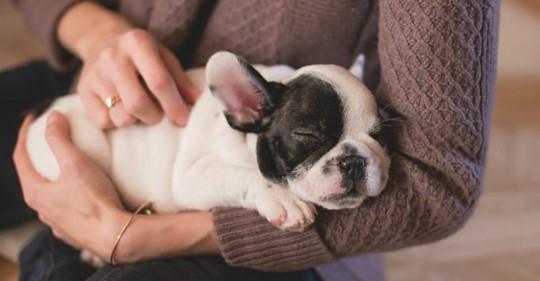 7 фактов о пользе домашних животных для здоровья человека