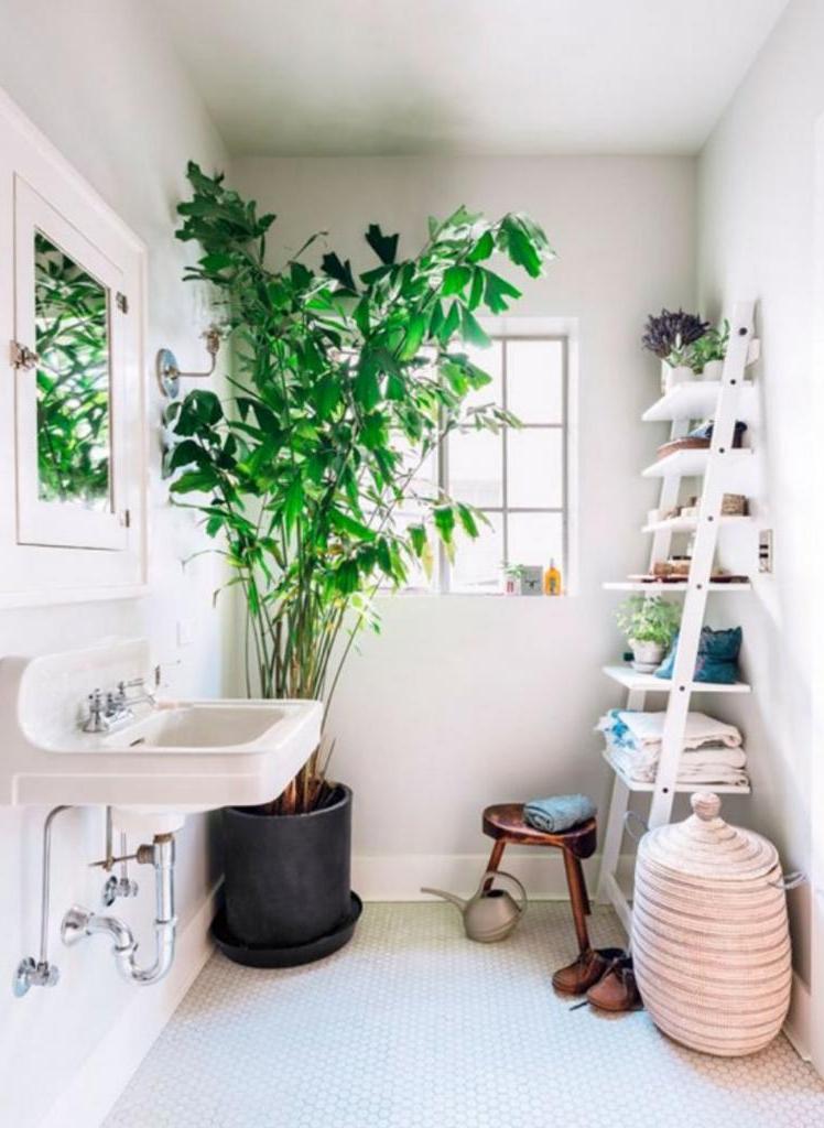 Новый тренд в дизайне ванных комнат. Добавляем живые растения (фото)