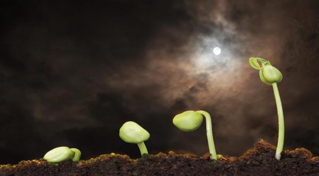 Самые благоприятные дни для посадки рассады в марте: осенью соберем богатый урожай