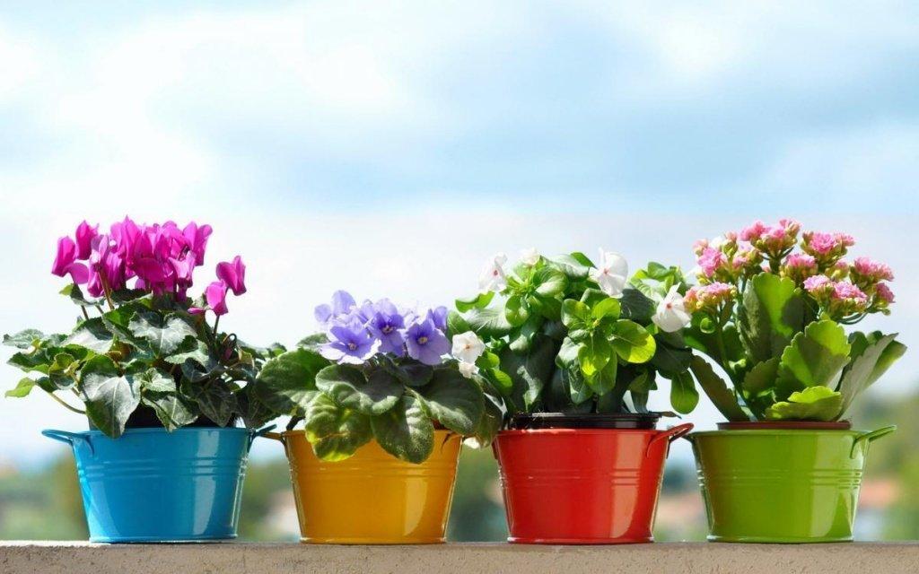 «Растительный» вопрос: почему не стоит выливать воду после варки яиц