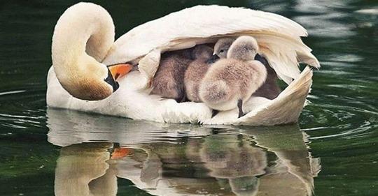 Мама – и этим все сказано. Трогательные снимки мам и их малышей в животном мире