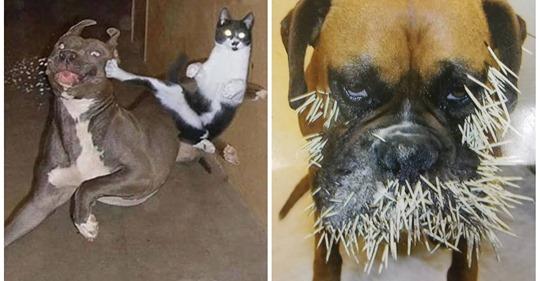 22 собак, которые теперь точно знают что такое «Неудачное знакомство»