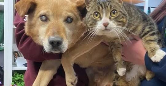 Слепая собака не могла обходиться без поводыря кота и из приюта они уехали вместе