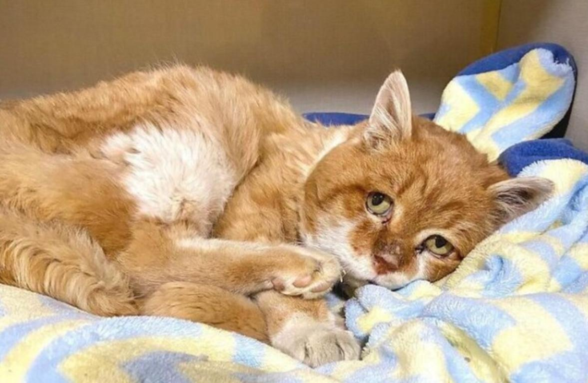8 лет кот шел к дому своего хозяина не зная, что того уже нет среди живых.