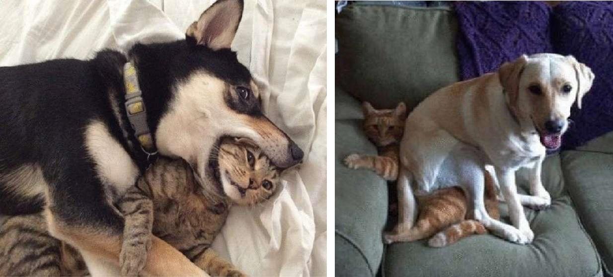 Несколько фотографий, которые доказывают, что между собаками и кошками есть дружба