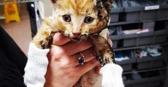 Шанс на спасение есть у каждого, даже у несчастного котёнка