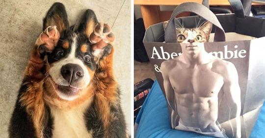 15 фотографий собак и кошек, которые одним своим видом поднимут настроение любому