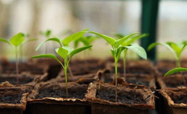 Как разбудить старые и просроченные семена: простой способ при помощи перекиси и дегазированной воды