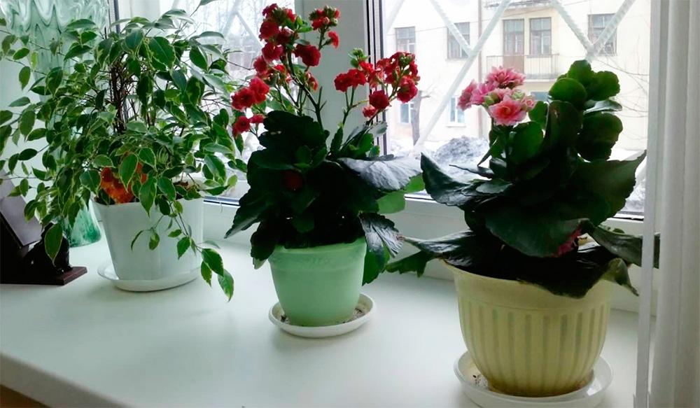 Растения будут цвести круглый год, если их удобрить одним простым средством из аптеки