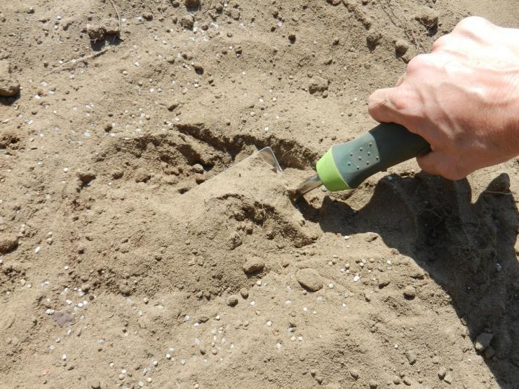 Песчаный грунт не проблема: какие удобрения внести, чтобы вырастить урожай