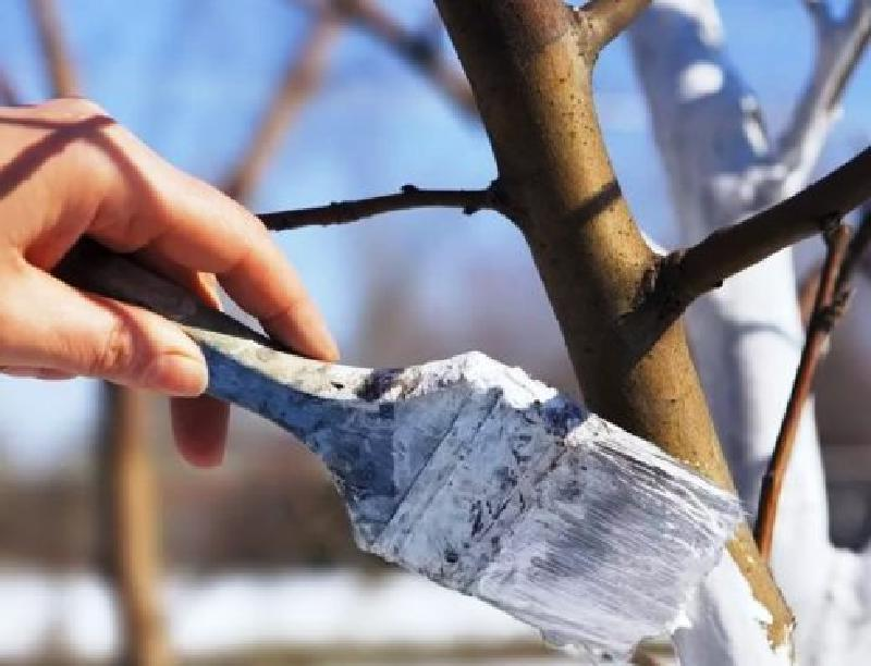Стартует новый дачный сезон: какие работы можно проводить в саду уже в марте