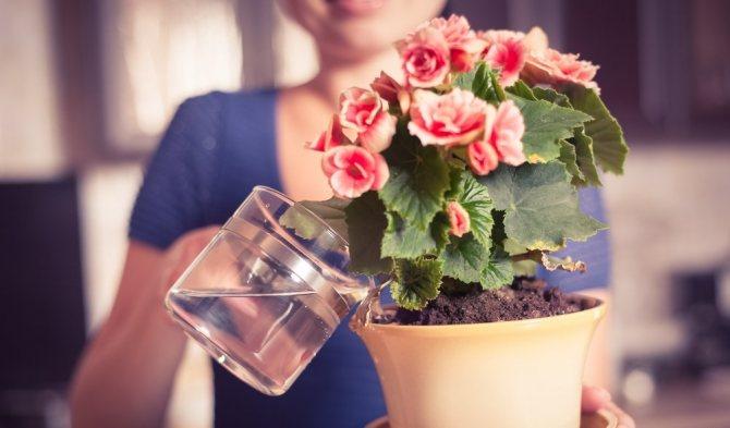 7 приемов, чтобы комнатные растения росли как на дрожжах