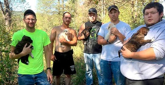 Мужчины устроили мальчишник, как вдруг из леса вышла бродячая собака