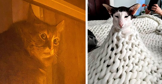 19 примеров, что котики функционируют по принципу «Жил, был и вдруг приуныл»