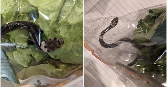 Жительница Австралии нашла змею в магазинном салате