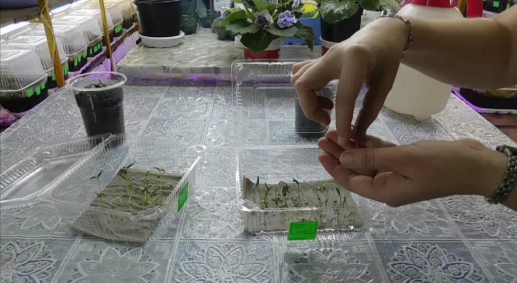 Какие семена можно сеять в кипяток: от сельдерея до цветной капусты