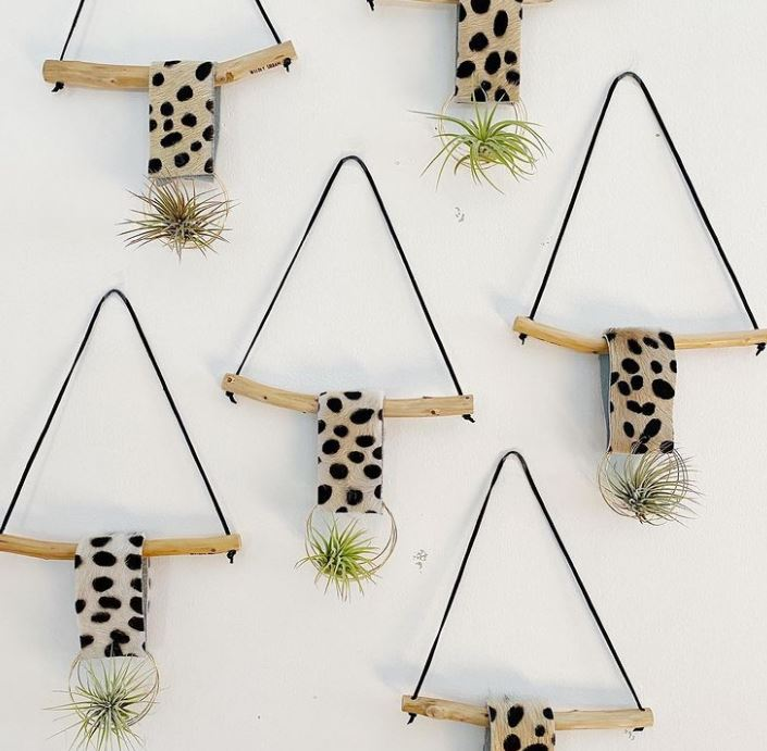 В горшках на подоконниках уже не модно: комнатные растения теперь выращивают в воздухе (фото)