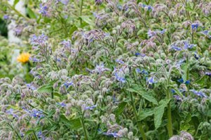 На грядках можно высаживать не только овощи, но и цветы: растения, которые украсят огород и защитят от вредителей