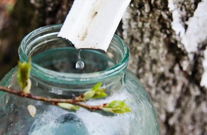 Как использовать березовый сок для весеннего детокса и улучшения вкуса блюд