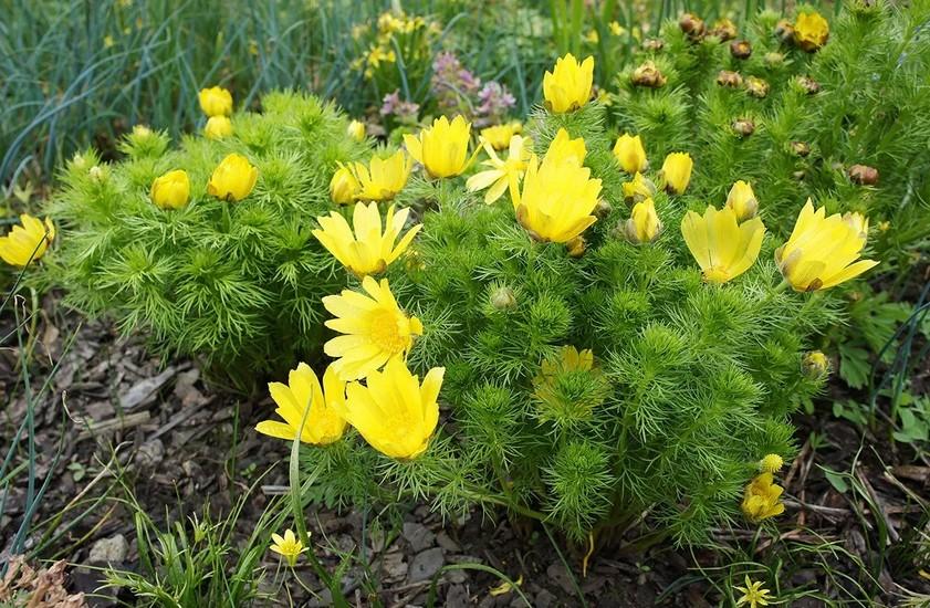 Наполняем альпийскую горку: растения, цветущие в разное время и пряные травы для кухни