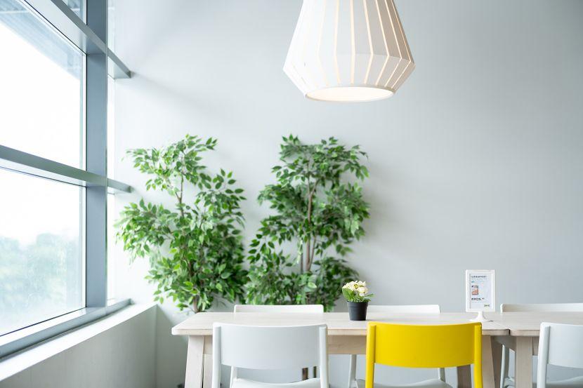 Как освежить растения после зимы: полезные советы по весеннему уходу