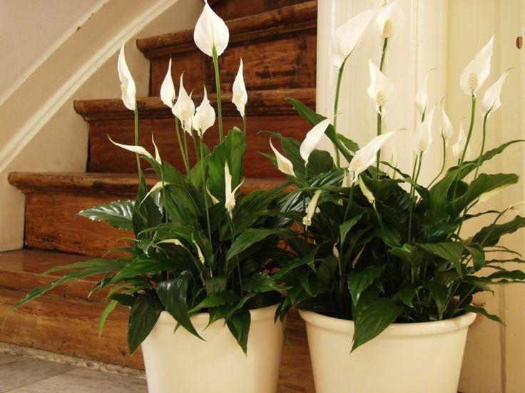 Удобрения не нужны: какой минералкой полить растения, чтобы радовали цветением