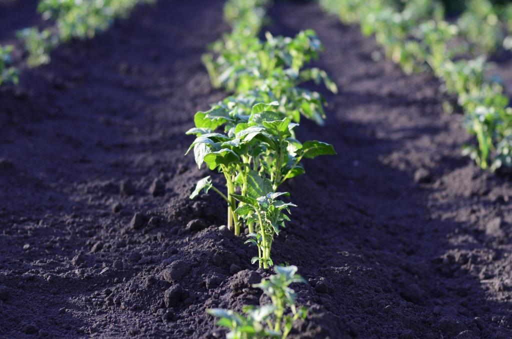 Помидоры любят перец, но враждуют с огурцами: что с чем посадить рядом, чтобы не разочароваться в урожае