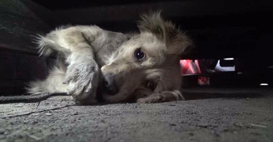 Этот пес был настолько напуган, что закрывал глаза как ребенок, когда за ним пришли спасатели