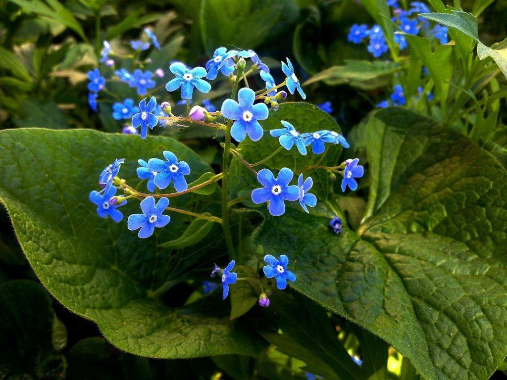 На участке много тени? Не беда: создаем роскошный сад из цветов, которые не любят солнце
