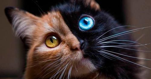 Кошка с самым редким окрасом в мире: как сложилась её жизнь? (11 фото)