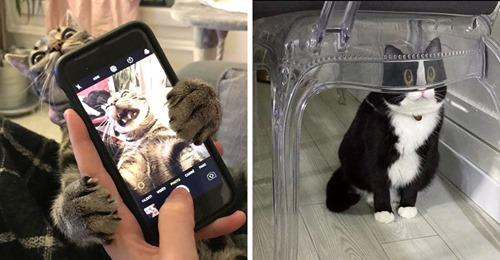 14 забавных фотографий, которые всем своим видом доказывают, что без кота и жизнь не та