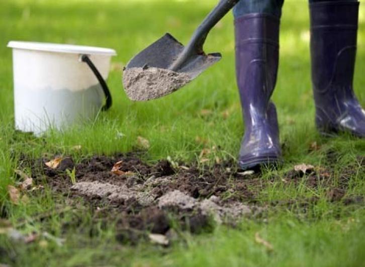 Зола может стать спасением для растений. Типичные ошибки, после которых средство не работает