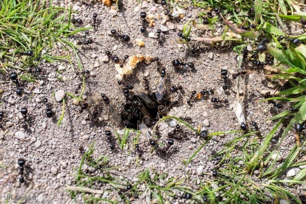 Простое приспособление для избавления сада от муравьев. Можно легко сделать своими руками