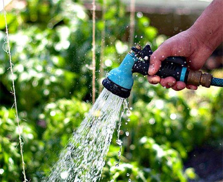 Огурцы должны получать много влаги: как ухаживать и поливать в огороде и теплице