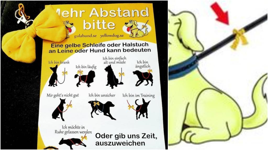 Не подходи: зачем завязывают желтый бант на поводке некоторых собак