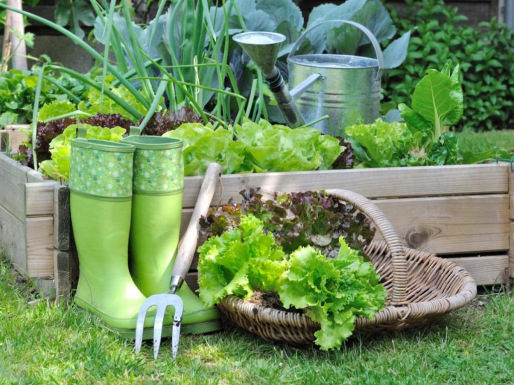 Огород в августе: какие овощи и зелень можно посадить