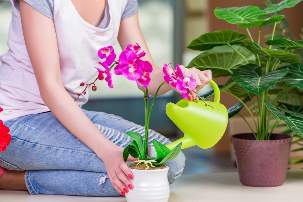 Не поливаем прямо в горшок: какой полив обрекает орхидею на увядание