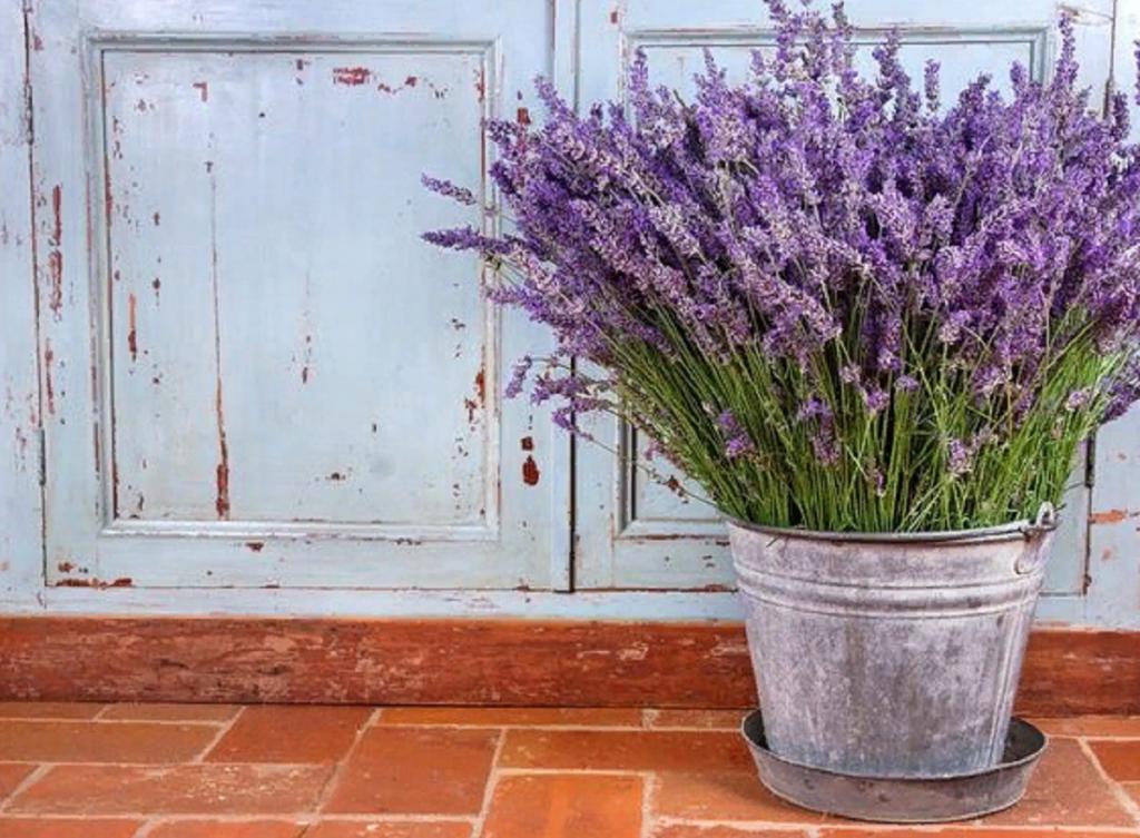 9 растений, которые привлекут в наш дом изобилие и положительную энергию